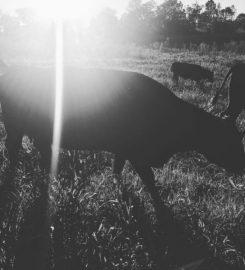 Southern Ridge Farm